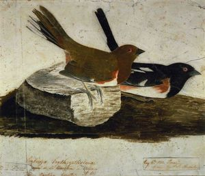 John James Audubon - Towhee Бантинг