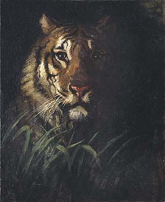 Tiger's Голова , ( покраска ), холст, масло по Abbott Handerson Thayer (1849-1921, United States)